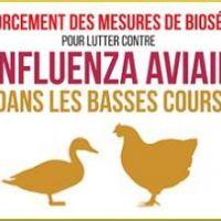 Protection des élevages - Influenza aviaire hautement pathogène H5N8 dans des pays voisins de la France